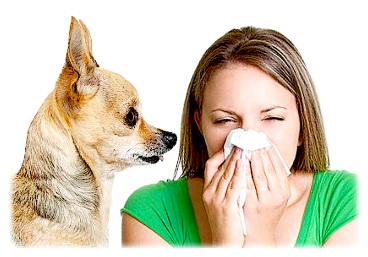 асит от аллергии отзывы цена