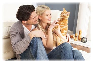 аллергия на перхоть кошки